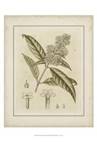 Small Tinted Botanical II (P) Fine Art Print