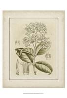 Small Tinted Botanical III (P) Fine Art Print