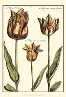 Small DePasse Tulipa I (P) Fine Art Print