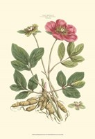 Small Blushing Pink Florals I (P) Fine Art Print