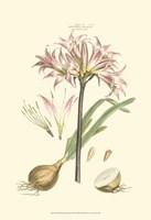 Small Blushing Pink Florals II (P) Fine Art Print