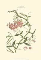 Small Blushing Pink Florals VI (P) Fine Art Print