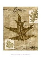 Mini Leaf Collage II (ST) Fine Art Print