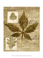 Mini Leaf Collage III (ST) Fine Art Print