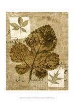 Mini Leaf Collage IV (ST) Fine Art Print