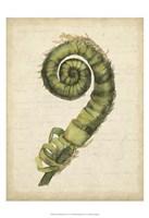 Small Fiddlehead Ferns II (U) Fine Art Print