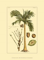 Printed Exotic Palm V Fine Art Print