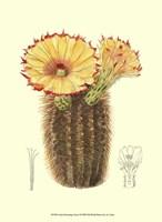 Flowering Cactus I Fine Art Print