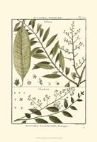 Fern Classification III Fine Art Print