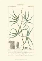 Botany II Fine Art Print
