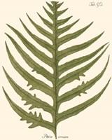 Small Antique Fern VIII Fine Art Print