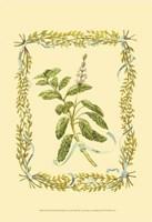 Sage Fine Art Print