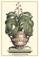 Antique Munting Aloe II Fine Art Print