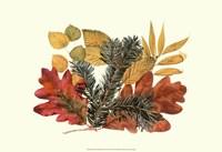Sm Wh Oak,Balsam Fir&Yw Birch Fine Art Print