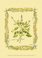 Small Basil Fine Art Print