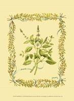 Small Basil Fine Art Print