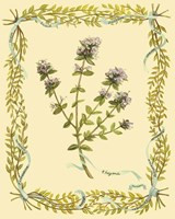 Small Thyme Framed Print