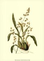 Orchid Array IV Fine Art Print