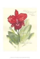 Elissa's Garden I Fine Art Print