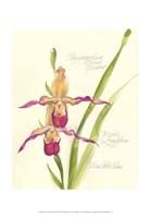 Elissa's Garden VII Fine Art Print