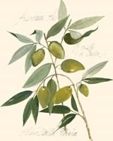 Ascolane Olives Fine Art Print