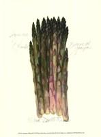 Asparagus Officinalis Fine Art Print