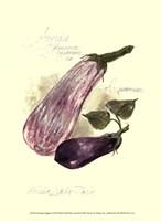 Aubergine Eggplant Fine Art Print