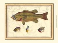 Printed Paul's Bass Fine Art Print