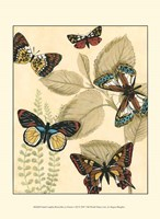 Sm. Graphic Butterflies I (P) Fine Art Print