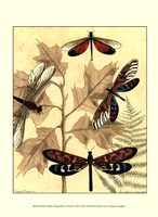 Sm. Graphic Dragonflies I (P) Fine Art Print