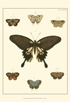 Small Heirloom Butterflies I (P) Fine Art Print