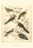 Small Avian Habitat II (P) Fine Art Print