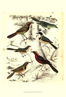Small Avian Habitat III (P) Fine Art Print