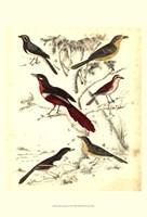 Small Avian Habitat IV (P) Fine Art Print