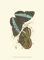 Butterflies VI Fine Art Print
