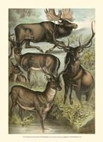 Johnson's Deer & Elk Fine Art Print