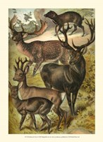 Johnson's Deer Fine Art Print