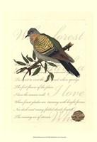 Small Romantic Dove I Fine Art Print