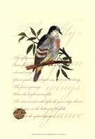 Small Romantic Dove II Fine Art Print