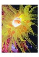 Graphic Sea Anemone II Fine Art Print