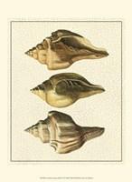 Crackled Antique Shells VI Fine Art Print