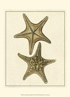 Crackled Antique Shells VIII Fine Art Print