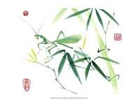 Mantis Fine Art Print