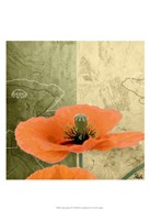 Orange Poppies III Fine Art Print