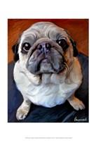 Pug on a Rug Fine Art Print