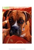 Harry Boxer Fine Art Print