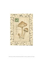 Mushrooms I Fine Art Print