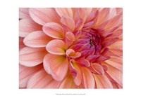 Graphic Dahlia II Fine Art Print