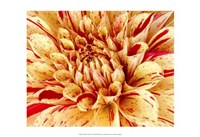 Graphic Dahlia III Framed Print