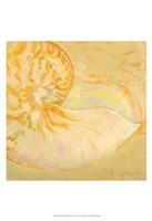 Shoreline Shells I Fine Art Print